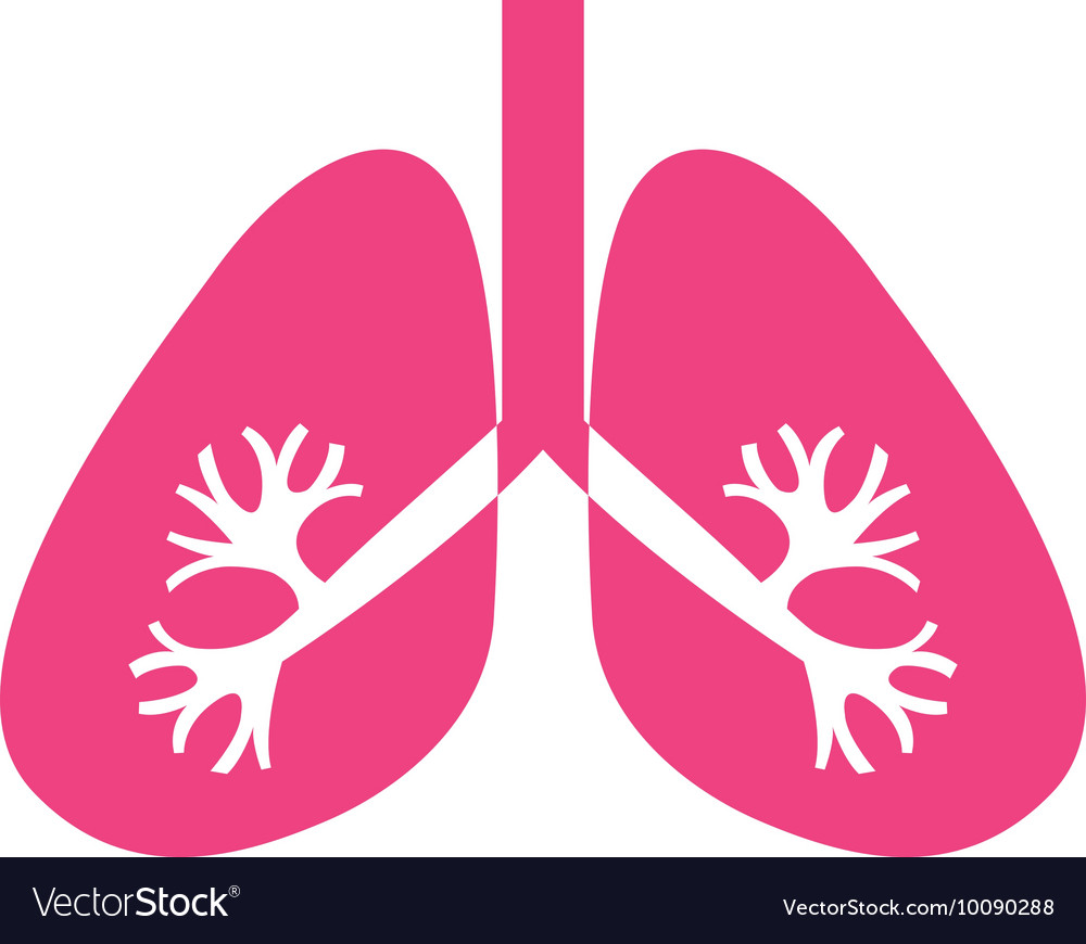 Lungs organ human isolated icon vector