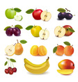 group with apples and fruits vector image