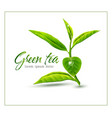 branch of green tea isolated on white background vector image