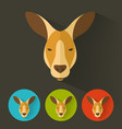 kangaroo portrait with flat design vector image