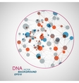 network connection and DNA eps10 vector image vector image