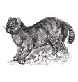 Egyptian Mau vintage engraving vector image vector image