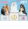 fashion Dog champion on the podium vector image vector image