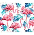 flamingo bird vector image