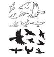 birds in flight silhouette vector image