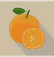 orange and slices isolated flat style vector image