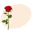 Deep red ruby rose with green leaves isolated vector image
