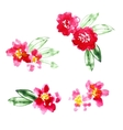 Collection of watercolor camellia flowers vector image