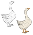 Sketch grey goose on a white background vector image