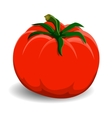 Red tomato on white background vector image