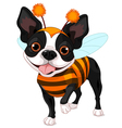 Halloween Boston terrier vector image vector image
