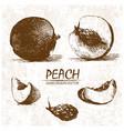 digital detailed peach hand drawn vector image