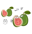 Tropical gren apple guava fruit cartoon character vector image vector image