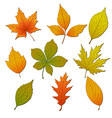Set with leaves vector image vector image