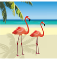 Two flamingo birds at Tropic Beach vector image