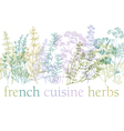 herbs of provence vector image