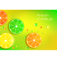 orange lemon lime and grapefruit vector image
