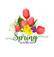 spring holidays tulips flowers bouquet vector image vector image