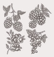 hand drawn sketch berries set with blackberry vector image