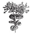 Trumpet Honeysuckle vintage engraving vector image vector image