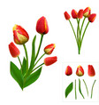 set of polygonal tulips on white background vector image