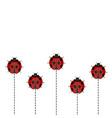 ladybug pattern on white background vector image