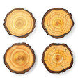 cross section tree set wooden stump vector image