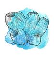hand drawn barnacle vector image