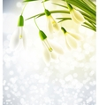 Background with snowdrops vector image