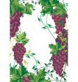 Grape vine design vector