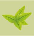 green tea leaves vector image