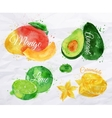 Exotic fruit watercolor mango avocado carambola vector image