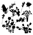Flowers Silhouettes vector image