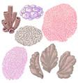 colored corals set vector image