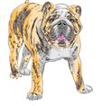 dog English Bulldog vector image