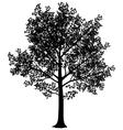 Maple silhouette vector image