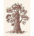 Broad-leaved tree vector image