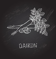 hand drawn daikon vector image
