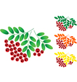 Ashberry vector image