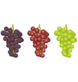 Grapes of different grades vector image