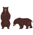 cartoon brown bears vector image