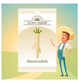 pack of horseradish seeds icon vector image