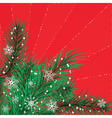 Christmas card with pine branches vector image vector image