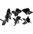 goldfish carp vector image