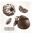digital detailed clementine hand drawn vector image
