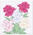 Bouquet with white and pink peonies vector image