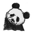 portrait of panda vector image