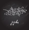 hand drawn jojoba vector image