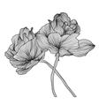 decorative floral element vector image