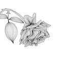 decorative floral element vector image vector image